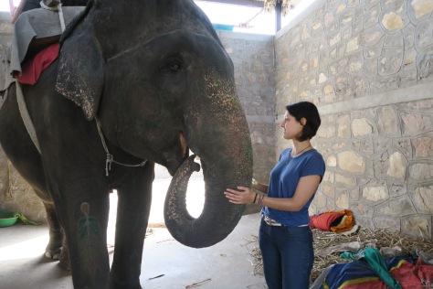 rencontre avec Rangoli, une femelle éléphant
