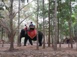 La térasse des éléphants
