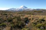 Nous rebroussons chemin en admirant une fois de plus le superbe Mt Ngauruhoe