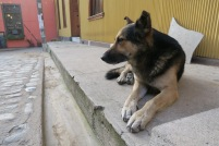 Un peu de compagnie canine